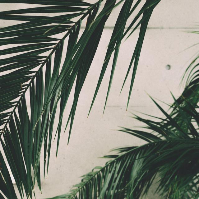 Psalm Trees