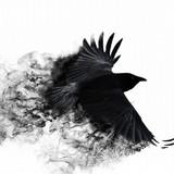 Mojo Crow