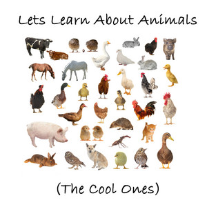Let's Learn About Animals (The Cool Ones)