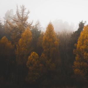 Melodías Relajantes | Sueño Y Serenidad Instantáneos
