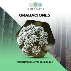 Grabaciones Ambientales Suaves del Bosque