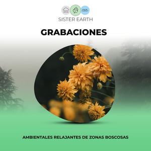 Grabaciones Ambientales Relajantes de Zonas Boscosas