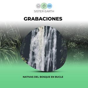 Grabaciones Nativas del Bosque en Bucle