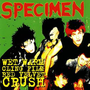 Lovers by Specimen