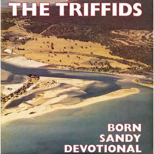 The Triffids  Born Sandy Devotional :Replay