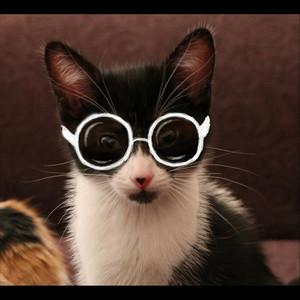 Kitty Fight (Radio Version)