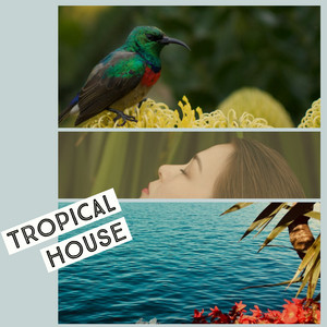 Tropical House cover art