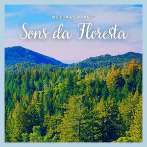 Musica Relaxante: Sons da Floresta, Pt. 16