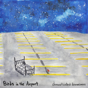 Domesticated Drowsiness - Birds In The Airport