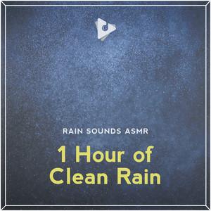 Springtime Birds Singing in the Rain by Rain Sounds ASMR, Rain Sounds, ASMR Studying Sounds