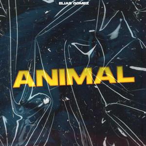 Animal Remix