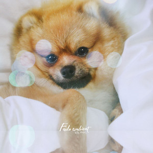 Happy Dream Music for your Pet Dog cover art