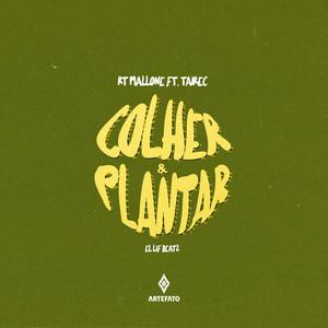 Plantar & Colher