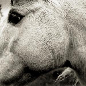 Bonny Light Horseman - Bonny Light Horseman