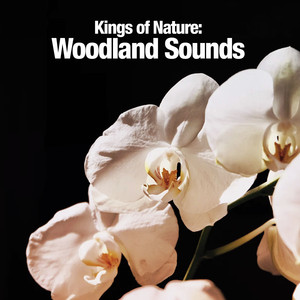Kings of Nature: Woodland Sounds