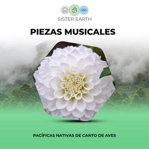 Piezas Musicales Pacíficas Nativas de Canto de Aves
