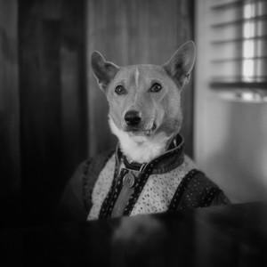The Isle Of Dogs album