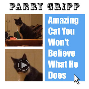 Amazing Cat You Won't Believe What He Does