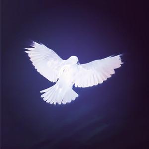 Raven White album