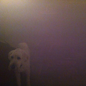Dog In The Fog ('Replica' Collaborations & Remixes)