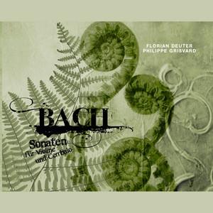 Sonata for Violin and Harpsichord in E Minor, BWV 1023: II. Adagio ma non tanto
