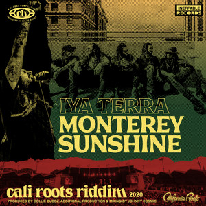 Monterey Sunshine