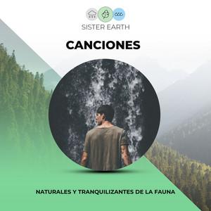 Canciones Naturales y Tranquilizantes de la Fauna