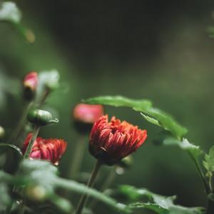 Compilación Relajante | Sueño Y Serenidad