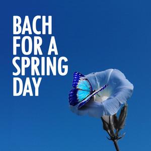 Suite for solo Cello No.1 in G, BWV 1007: 1. Prelu... cover art