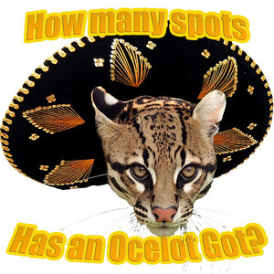 How Many Spots Has an Ocelot Got?
