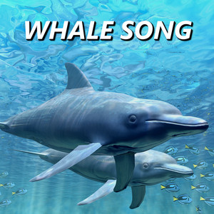 Whale Song profile picture