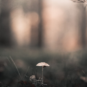 Gentle Sounds of Rain | Relaxation