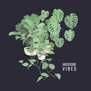 Vibes - Vacations