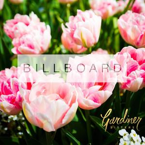 Billboard (If I'm Honest)