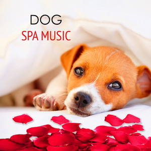 Dog Spa Music (Dog Salon - Bird Sounds)