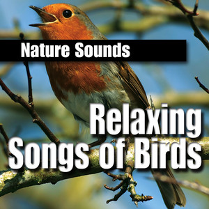 Friendly and Reassuring Budgie Calls cover art