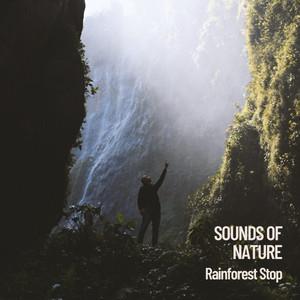 Sounds of Nature: Rainforest Stop