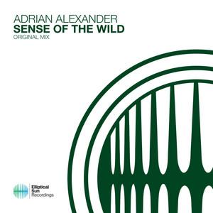 Sense Of The Wild