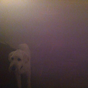 Dog in the Fog - 'Replica' Collaborations & Remixes