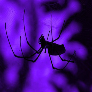 Spiders by santosya