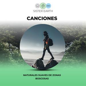 Canciones Naturales Suaves de Zonas Boscosas