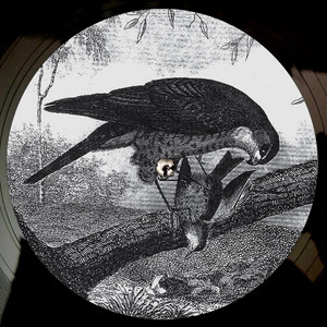 Karma Kid · Bird of prey