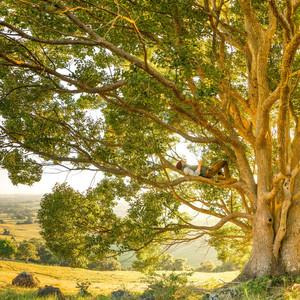 Sonidos Ambientales de la Naturaleza | la Paz y la Tranquilidad