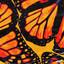 Butterflies by ASTN