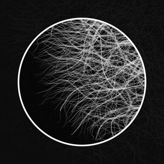 Mycelium Image