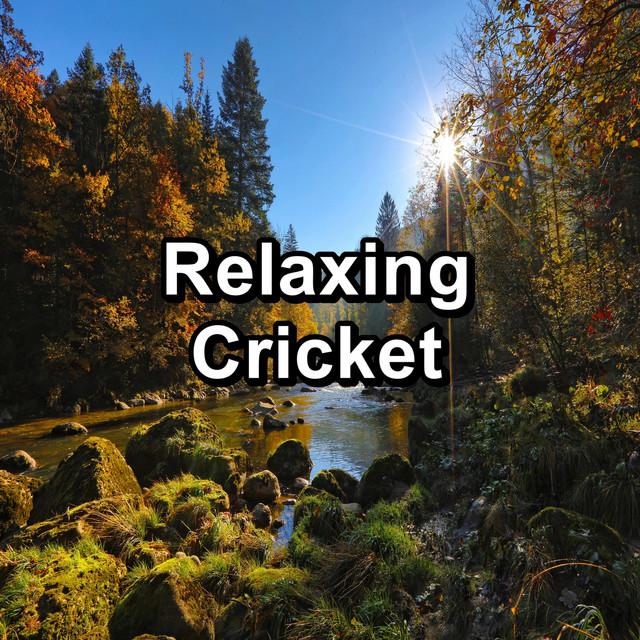 Relaxing Cricket