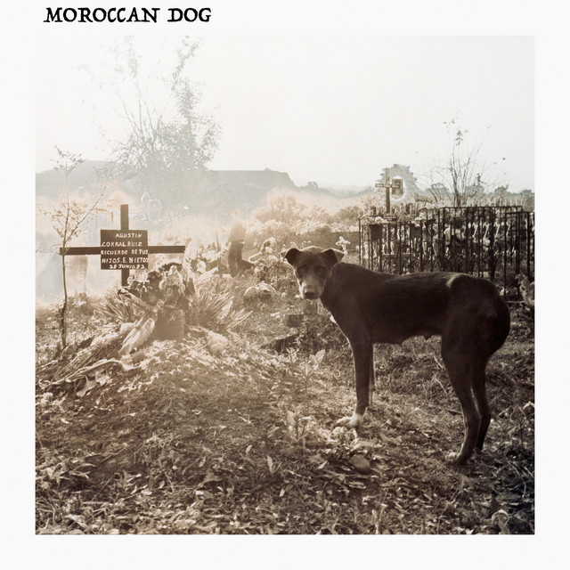 Moroccan Dog