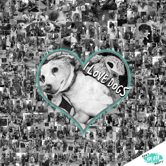 I Love Dogs by Don't Splash Marty
