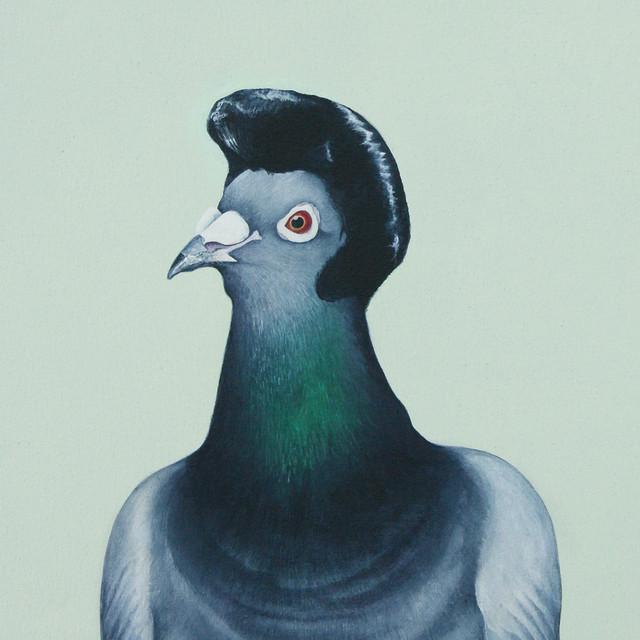 1/2 dove - 1/2 pigeon