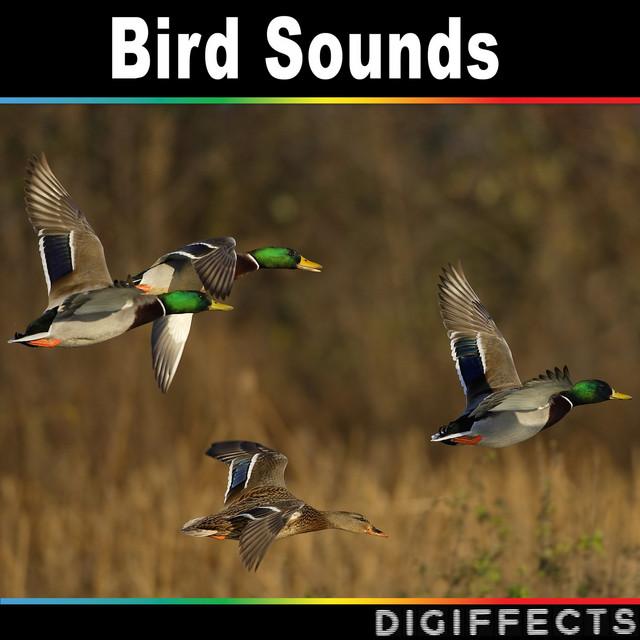 Crane Bird Version 1